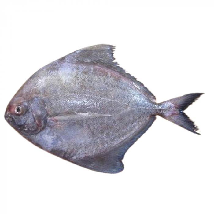 Black Pomfret Fish Frozen (1 Lb)