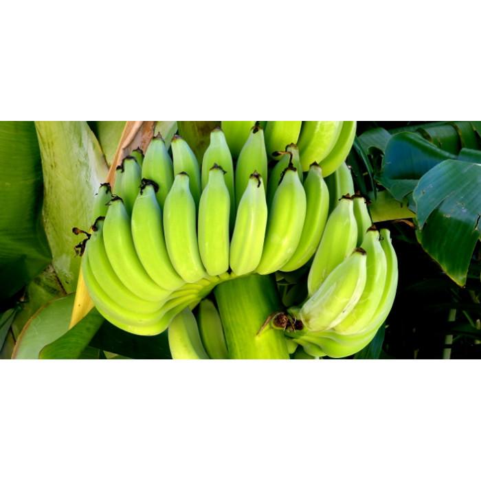 Ash Plantain/Raw Cooking Bananas (1 Lb)