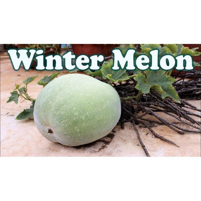 Ash Gourd/Winter Melon/Petha/White Pumpkin/Kumbal-kayi (1 Lb)